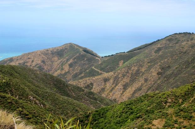 Te Kopahou Bunker track